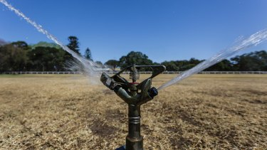 A sprinkler working overtime at Sydney's parched Centennial Park on Monday.