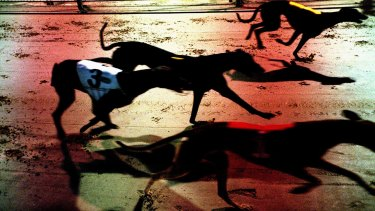 A general view of a greyhound race.