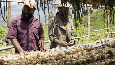 Chris Suya (left) and Max Soa inspect the first harvest of bulb onions at their cooperative in Maramun village. About 80 per cent of the harvest of this cash crop was lost to El Nino-driven drought.