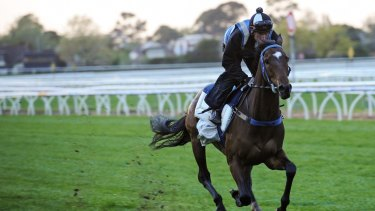 Tested horse: Lidari during a trackwork session in October last year.