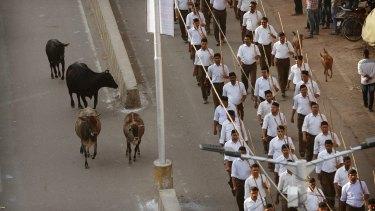 Stray cows - sacred to Hindus - roam on a street as volunteers of the Hindu nationalist  Rashtriya Swayamsevak Sangh march  in Allahabad.