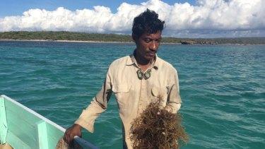 Rote Island seaweed farmer Nikodemus Manefa with his crop. Seaweed farmers say the Montara spill devastated their livelihoods.