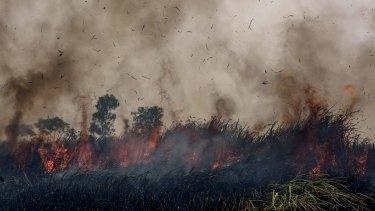 Fire burns peatland and fields at Sungai Rambutan village, South Sumatra.