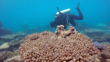 Scientists assess coral mortality at Zenith Reef.