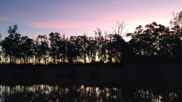 Murray River red gums: Logging will be permitted over five years in 44 plots within the Murray Valley National Park.