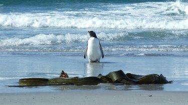 Drifting marine vegetation poses a risk to Antarctica's ecosystem.