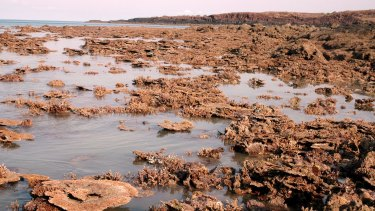 Bonaparte Archipelago has some of the most heat-tolerant corals in the world.