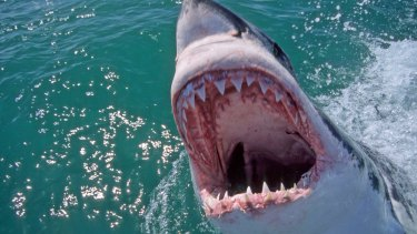 Not wasting money on sharks and creating more lifeguard services would help save lives.