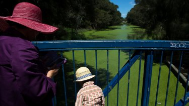 Algal bloom in waterway in Rockdale Bicentennial Park, Sydney,  2016.