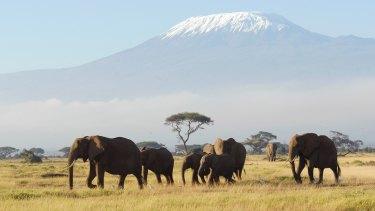 Elephants in Tanzania.