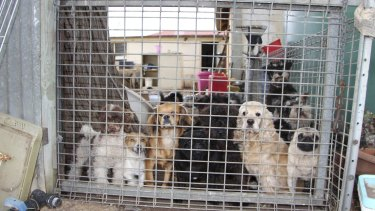 A South Australian puppy factory that was found to be selling dogs to pet stores affiliated to the industry's peak body, PIAA.