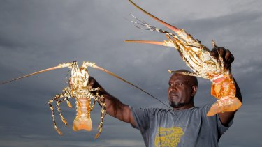 Fisherman Harry Ghee with his crayfish catch on Erub Island in the Torres Strait.