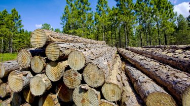 The Clean Energy Finance Corporation backs wood waste to help replace coal-fired power.