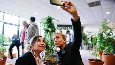 Visitors take pictures of themselves with a marijuana plant during the Expo Cannabis Fair, in Montevideo, Uruguay.
