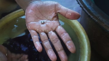 Sifaiyah holds the gold extracted from the mercury process in Sekotong village.