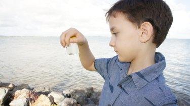 Sebastian Murphy, 6, looks at the Irukandji which stung him at Wellington Point.
