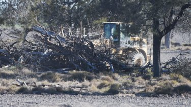 Removing trees on a property near the Newell Highway in the state's far north in August.