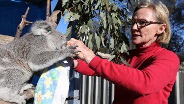 Alaine Anderson from Croppa Creek has been fighting to save koala habitat destruction by neighbouring farmers.