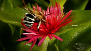 """Said the plant to the bee: """"I can feel you all over me."""""""