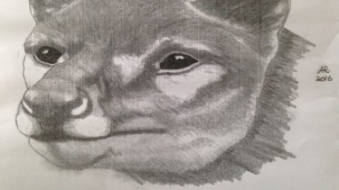 A sketch of the animal Greg Booth says he saw in south-west Tasmania.