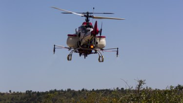 A 3.6 metre long remote-controlled helicopter will tackle one the country's most noxious weeds: blackberry.