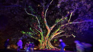 The Vivid Sydney Light Walk in the Royal Botanic Gardens.