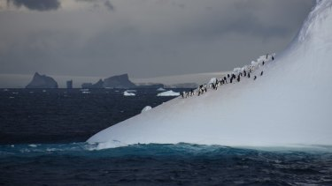 Adelie penguins rest on an iceberg off the Antarctic Peninsula.