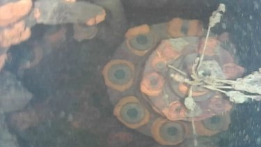 This image captured by the underwater robot shows a part of a control rod drive of Unit 3 at Fukushima No.1 nuclear plant in Okuma town, north-eastern Japan.