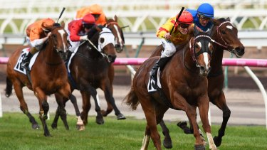 In charge: Mark Zahra steers Palentino to victory over Black Heart Bart in the Makybe Diva Stakes at Flemington on Saturday.