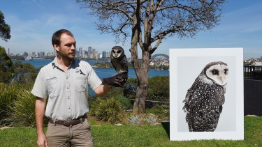 Taronga Zoo bird keeper Brendan Host holds Griffin the sooty owl with an image of  the bird taken by photographic artist Leila Jefferys.