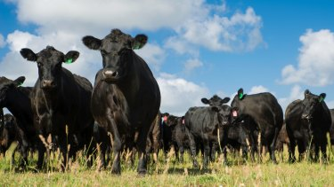 Australia's red meat industry sees significant potential export opportunities in Britain after Brexit.