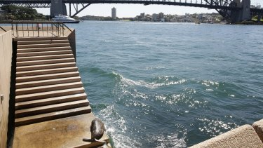 A seal visits the Sydney Opera House in 2014