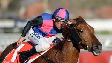Exciting: Vega Magic will likely start in the Memsie Stakes on Saturday.