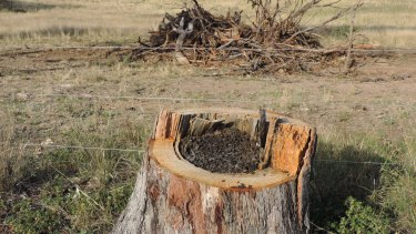 """The Baird government is on the cusp of """"gutting"""" environment protection, opponents say."""