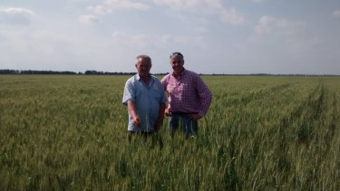 Lawrence Richmond (right) examines a Ukraine wheat crop with agronomist Taras Stepanovich.