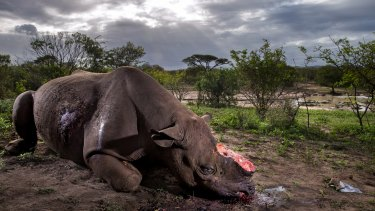Brent Stirton's award-winning image of a de-horned rhino which had been poached illegally in Hluhluwe Umfolozi Game Reserve, South Africa.