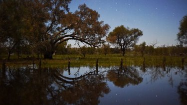 Above average rain is comes as a relief to the Macquarie Marshes.