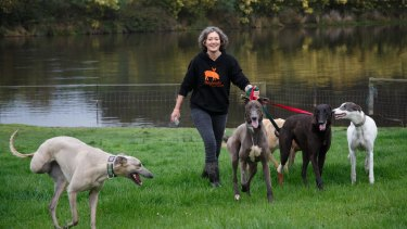 Emma Haswell, the owner of Brightside Farm Sanctuary in the Huon Valley, near Hobart, with a posse of greyhounds  she has rescued.