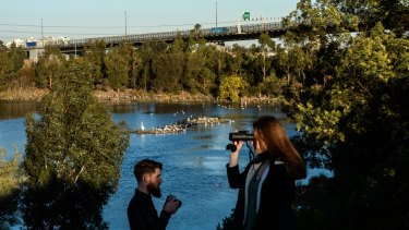 Wild Melbourne is a group of young scientists wanting to reconnect Melburnians with Fauna and Flora in their city.