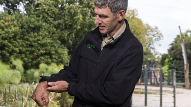 Melbourne Zoo's head vet Dr Michael Lynch shows Willow's problem.
