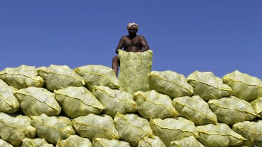 The wholesale price of cabbage in Shanghai is about 6 per cent more expensive than a tonne of hot rolled coil.