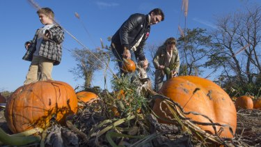 Liberal leader Justin Trudeau picks pumpkins with his wife Sophie and son Xavier, last week in Gatineau, Quebec.