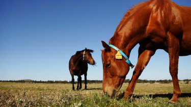 A study conducted by Norwegian animal behaviour experts has found horses are able to convey their preferences to handlers by touching symbols with their noses.