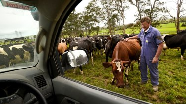 Cash cow: Dairy Farmer John Versteden. The tumult in world markets and sliding commodity prices is expected to benefit China, sparking consumer demand.