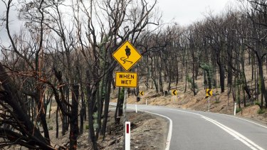 The Kinglake-Heidelberg Road four months after the Black Saturday Bushfire in 2009.