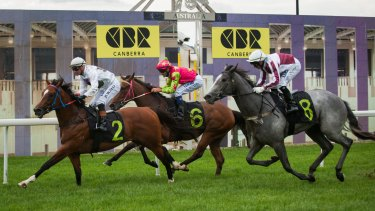 Canberra trainer Nick Olive is aiming Fox Tales at Canberra's group 3 Black Opal Stakes.