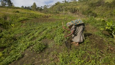 Sarah Marome tends her sweet potato garden, a last desperate attempt to supply her family with food.