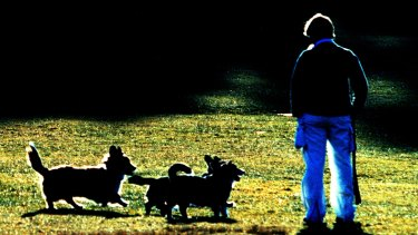 Dogs enjoy vigorous exercise  and the chance to sniff things.
