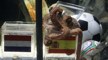 Paul the Octopus successfully predicts Spain to win the FIFA World Cup in 2010.