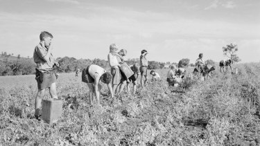 A publicity shot for the Fairbridge Farm in Molong, NSW, where migrant children worked.